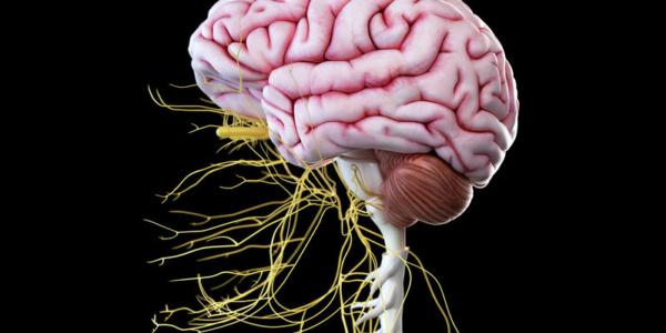 Badanie neurologiczne – w praktyce terapeuty manualnego