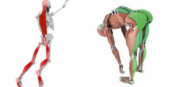 Diagnostyka funkcjonalna oraz łańcuchy mięśniowe w treningu motorycznym