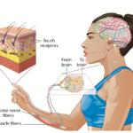 ❓Czy wiesz, że stymulacja mechanoreceptorów wewnątrzpowięziowych trwa tylko 2 minuty...