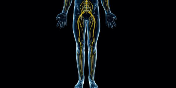 Neuropatie kończyny dolnej – anatomia i sposoby leczenia